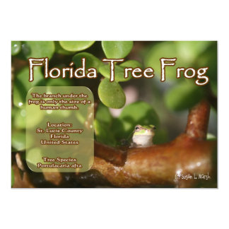 Florida Tree Frog Design with explanation text Announcements