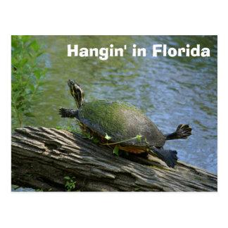Florida Turtle postcard