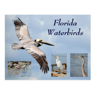 Florida Waterbirds Postcard