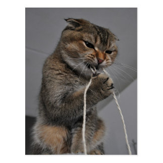 Flossing cat postcard