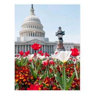 Flower bed in springtime in Washington, D.C. Postcard
