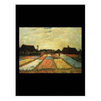 Flower Beds in Holland Postcard