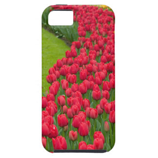 Flower beds of multicolored tulips case for the iPhone 5