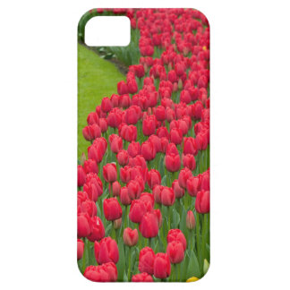 Flower beds of multicolored tulips iPhone 5 covers
