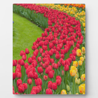 Flower beds of multicolored tulips plaque