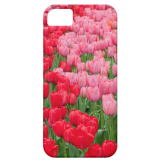 Flower beds of red and pink tulips iPhone 5 covers