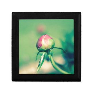 flower bud crossprocessbulb gift box
