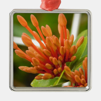 flower buds Silver-Colored square ornament