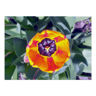 Flower Cup Tulip 1 Poster