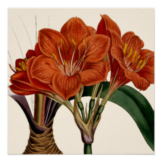 Flower Curtis Botanical Tote Poster