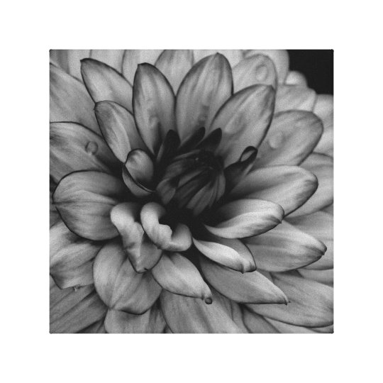 Flower Dahlia Canvas Print