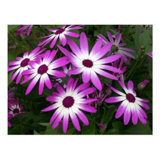 flower daisy postcard