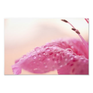 Flower Dew Drops Photographic Print