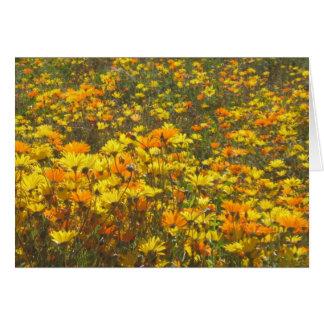 Flower Field Card