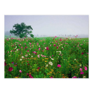Flower Field of Kentucky Poster