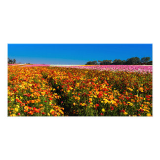 Flower Fields Card