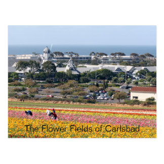 Flower Fields of Carlsbad Postcard