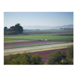 Flower Fields Postcard