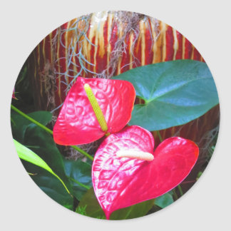 Flower Floral photos from Longwood Gardens Classic Round Sticker