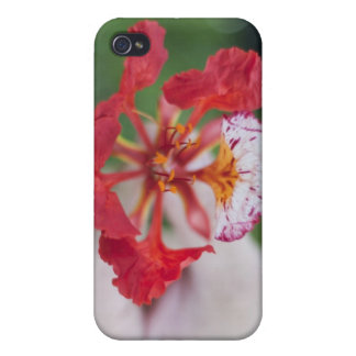 """""""Flower For You"""" Hard Shell Case for iPhone 4/4S iPhone 4 Cover"""