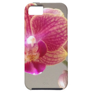 Flower from bud to blossom iPhone 5 cover