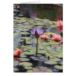 Flower in lily pads card