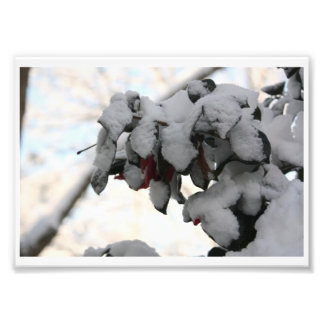 flower in snow photo print