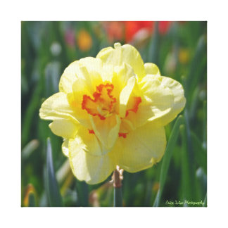 Flower in Yellow Canvas Print