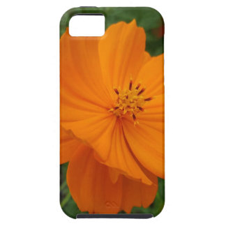 Flower iPhone 5 Cases