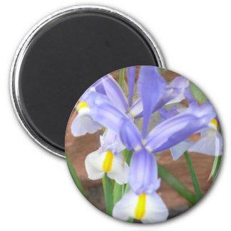 flower,iris magnet