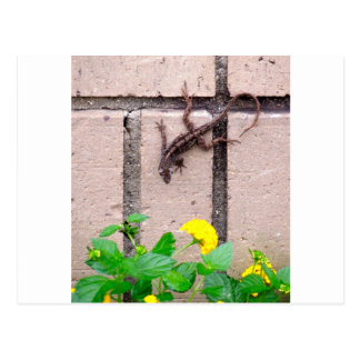 FLOWER LIZARD POSTCARD