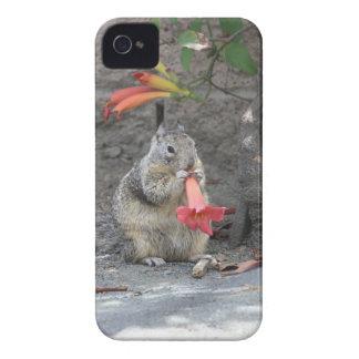 Flower Loving Squirrel Case-Mate iPhone 4 Case