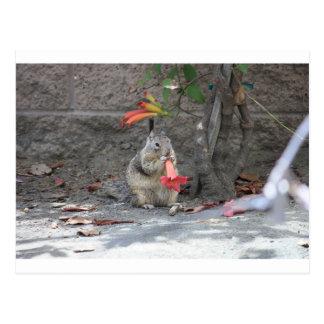 Flower Loving Squirrel Postcard