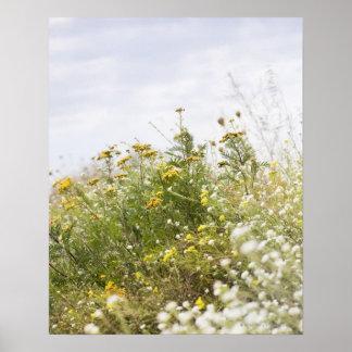 Flower meadow, Mecklenburg-Vorpommern, Germany Poster
