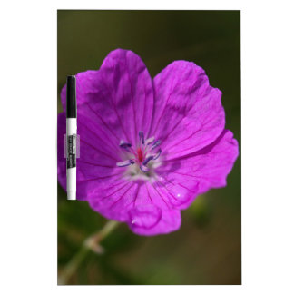 Flower of a bloody geranium dry erase white board