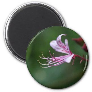 Flower of a burning bush 2 inch round magnet