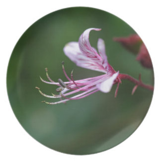 Flower of a burning bush dinner plate