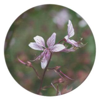 Flower of a burning bush dinner plate