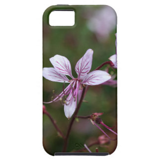 Flower of a burning bush iPhone 5 covers