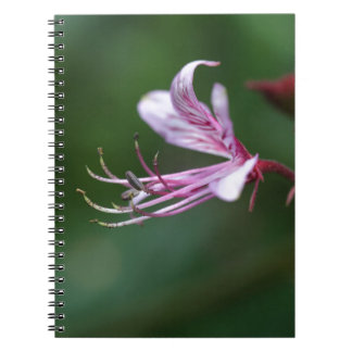 Flower of a burning bush notebook