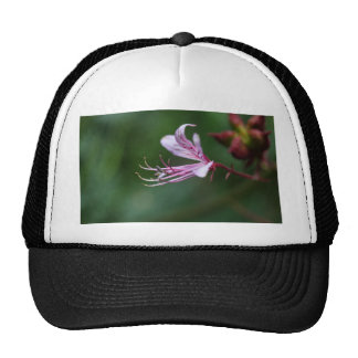 Flower of a burning bush trucker hat
