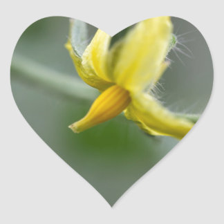 Flower of a Cucumber  plant Heart Sticker