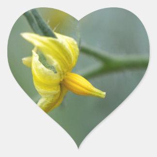 Flower of a Cucumber  plant Heart Sticker