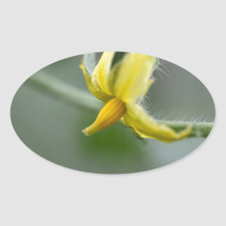 Flower of a Cucumber  plant Oval Sticker