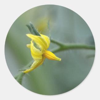 Flower of a Cucumber  plant Round Sticker
