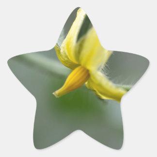 Flower of a Cucumber  plant Star Sticker