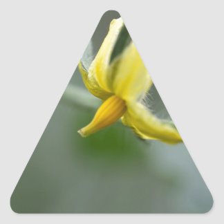 Flower of a Cucumber  plant Triangle Sticker