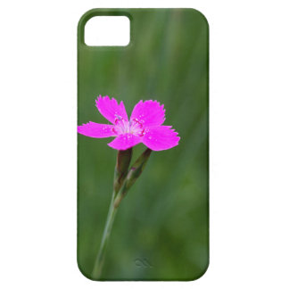 Flower of a maiden pink iPhone 5 case