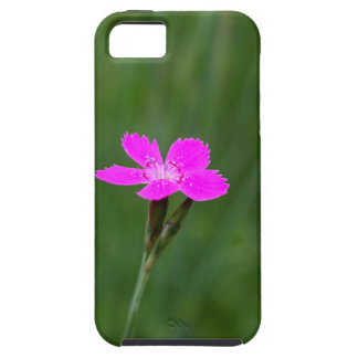 Flower of a maiden pink iPhone 5 cover