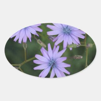 Flower of a mountain lettuce oval sticker